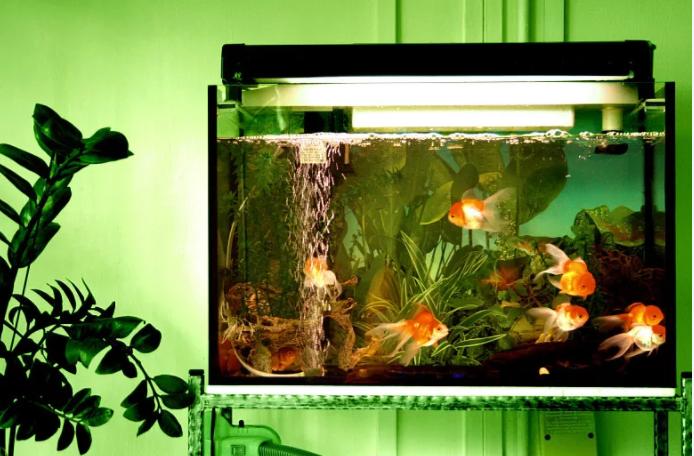 避免在卧室养鱼
