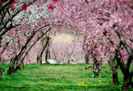 桃花位是什么意思?