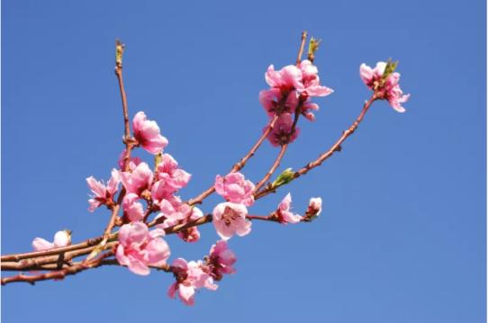 什么是桃花位?